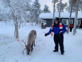 Reindeer - 12