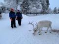 Reindeer - 13