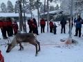 Reindeer - 18