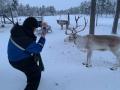 Reindeer - 7