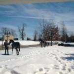 ky snow pics2