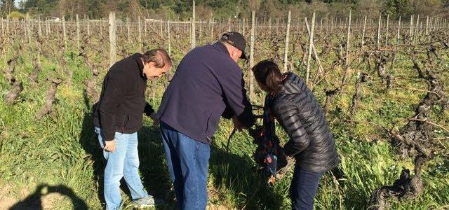 Working the vineyard fields at Neyen Winery