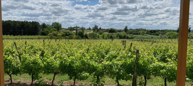 Touring Wine Country in Montevideo